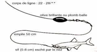 Pêche à la tirette : montages pour le sandre et la perche
